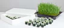 Wheatgrass (prices excl. VAT)
